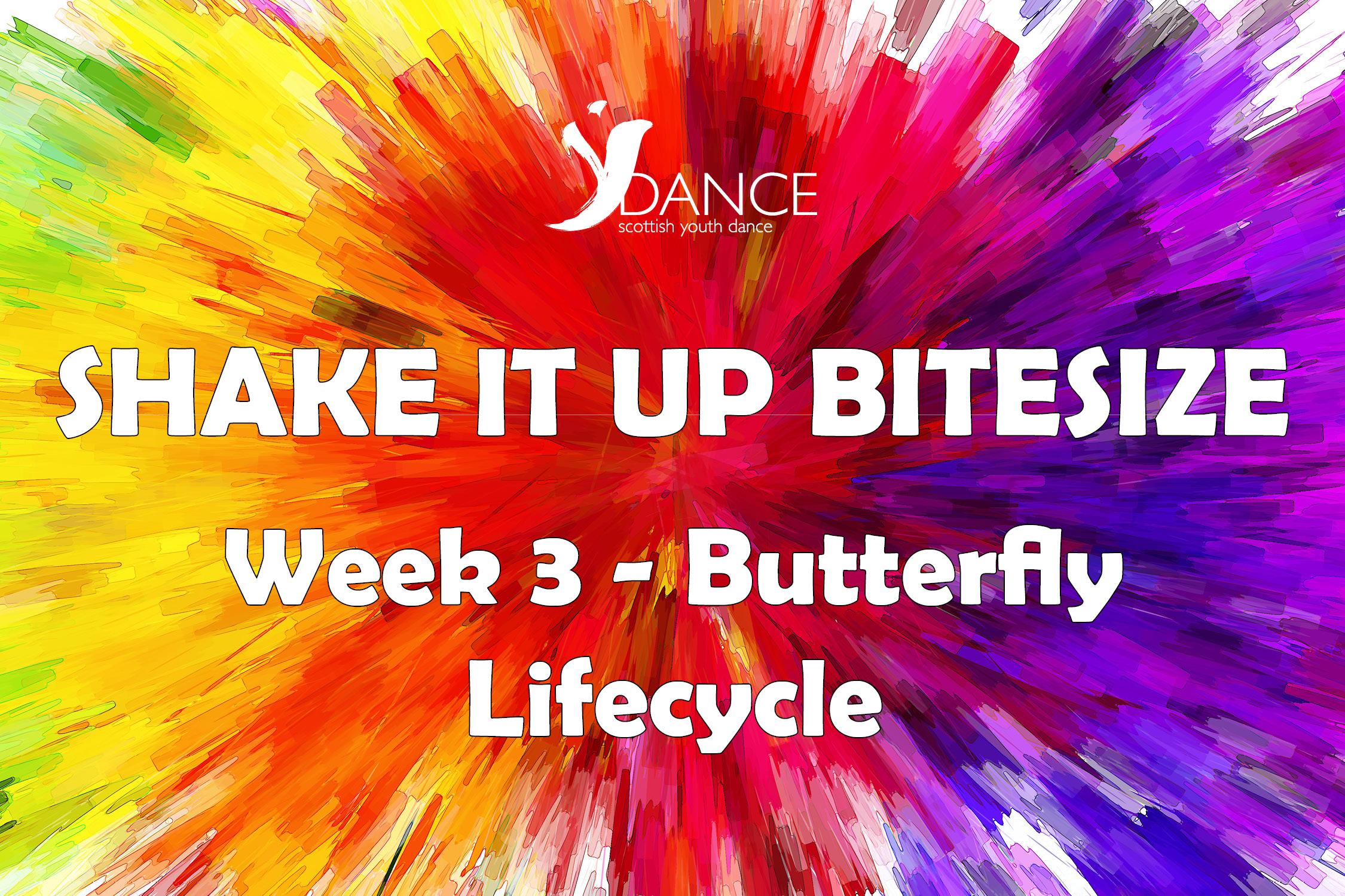 SIU Bitesize - Wk3 - Butterfly Lifecycle